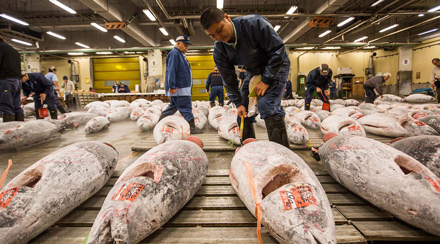Tsukiji fish market for Wholesale fish market los angeles